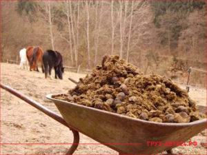 Конский навоз в тележке на заднем фоне два коня