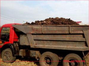 КАМАЗ с красной кабиной привез навоз полный кузов